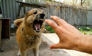 Злая собака - повышенная угроза