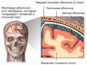 Мозговая оболочка